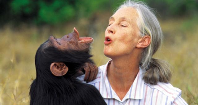 Jane Goodall, defensora de los chimpancés y de la naturaleza