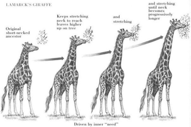 Lamarck develops Hypothesis of evolution by means of acquired characteristics