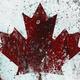 28 1723 oboi flag kanady narisovannyj kraskoj 2560x1024