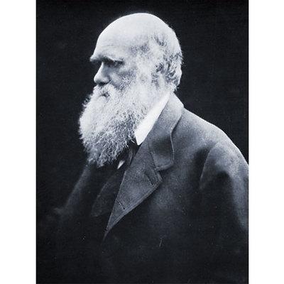 Vida de Darwin, Lucía timeline