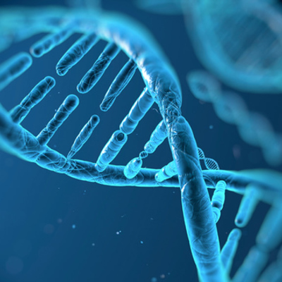 Biologi - genetik och evolution timeline