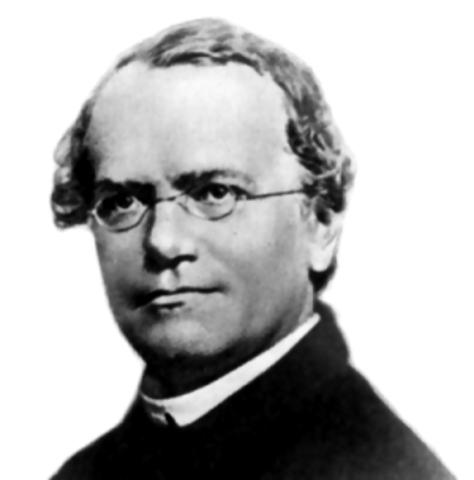 Gregor Johann Mendel (República Checa; 20 de julio de 1821, 6 de enero de 1884)