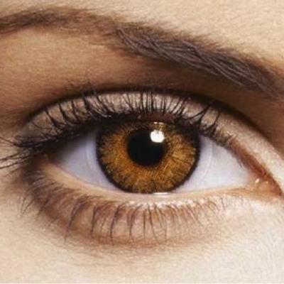 Desarrollo embriológico del ojo timeline