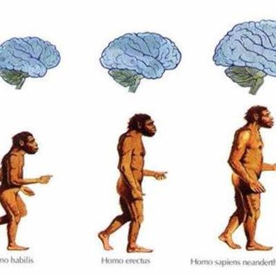TEORÍA DE LA EVOLUCIÓN DEL HOMBRE  timeline