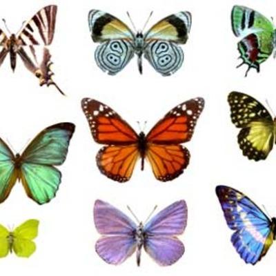 A butterflies Life timeline