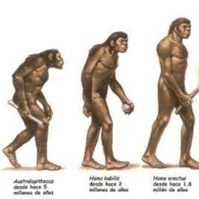 LINEA DEL TIEMPO EVOLUCIÓN DEL HOMBRE timeline