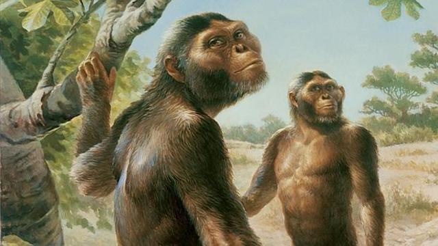 """Australopithecus: (""""monos del sur"""")"""