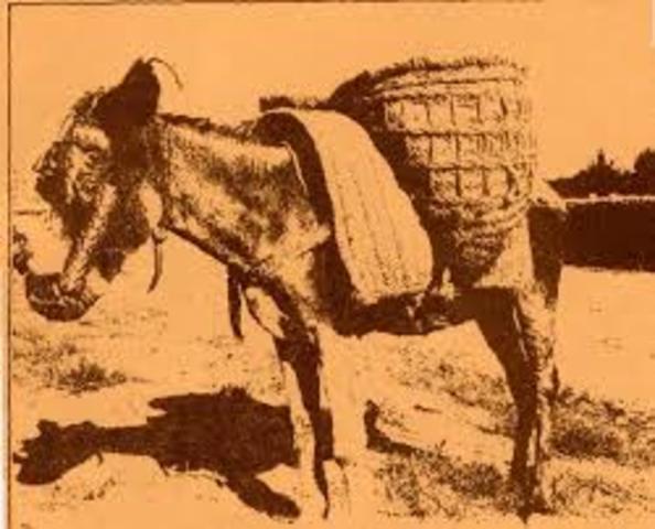 Animales como medio de transporte
