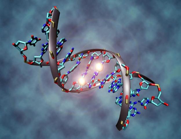 AUG 15 2013 Científicos descifran el genoma humano Ámbito Científico