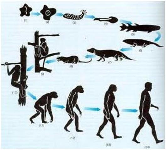 Teoría de Darwin y Wallace