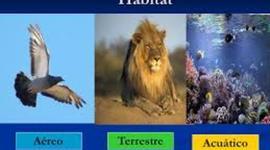 HÁBITAT DE NUESTROS AMIGOS LOS ANIMALES timeline