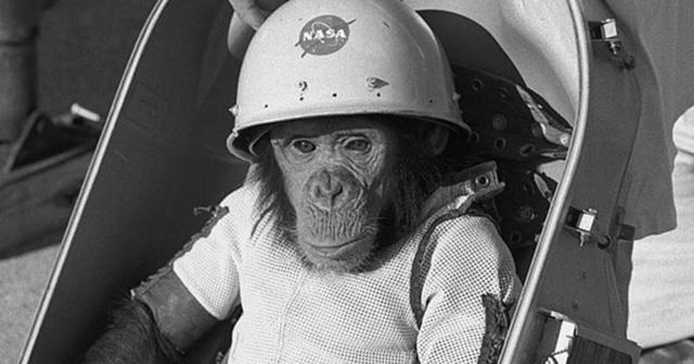 Image result for monkey shuttle helmet