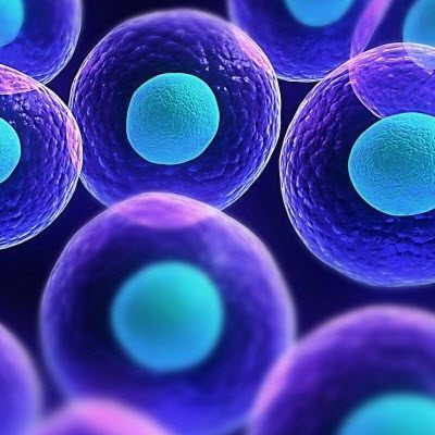 Descubrimiento de las células timeline