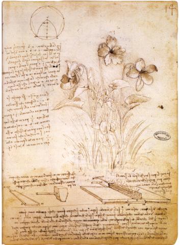 Plasmo su interés por la Botánica