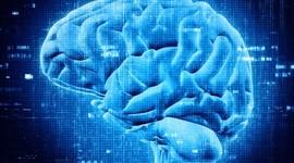 Neuroscience timeline