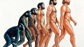 LA EVOLUCIÓN DEL HOMÍNIDOS timeline