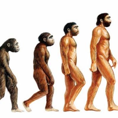 LA   EVOLUCIÓN timeline