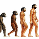 Evolucion humana grande
