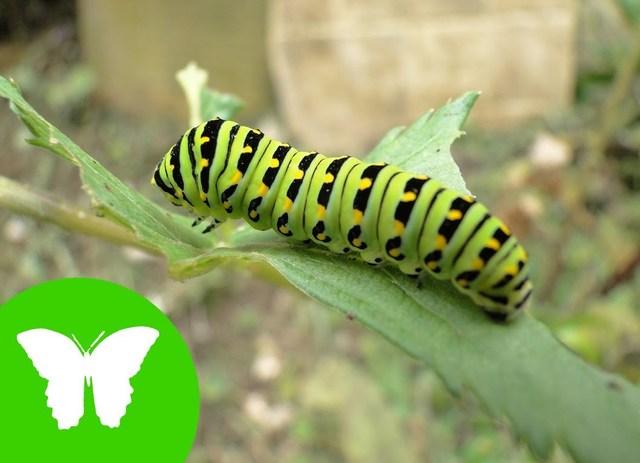 Invertebrados Gusanos