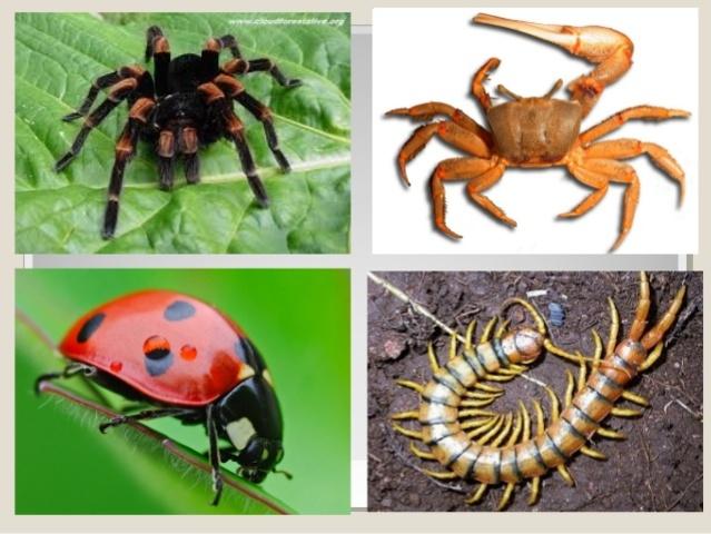 Invertebrados Artrópodos