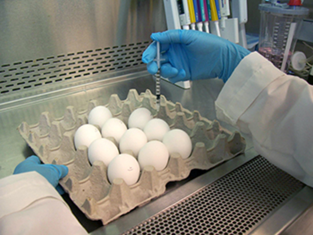 First Viral Growth in Embryonated Eggs