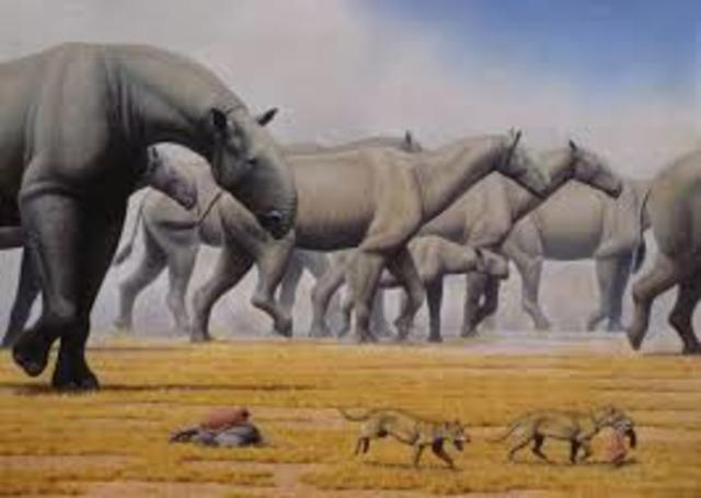 Periodo Oligoceno