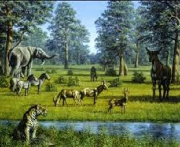 Periodo Plioceno