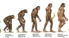 Linea de Tiempo Evolucion del Genero Homo timeline