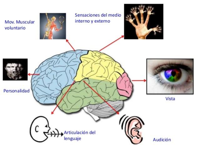 Fisiología de las Sensacionesn (Cap 10)