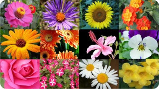 Plantas ornamentales.