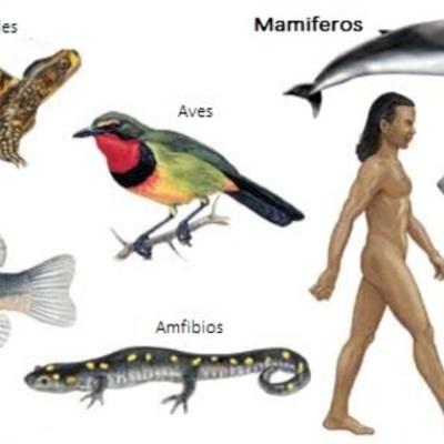 Evolución de los animales vertebrados timeline