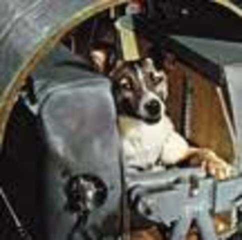 Laika Becomes the First Living Animal to Enter Orbit
