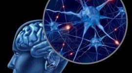 Línea de tiempo 'Cerebro' timeline