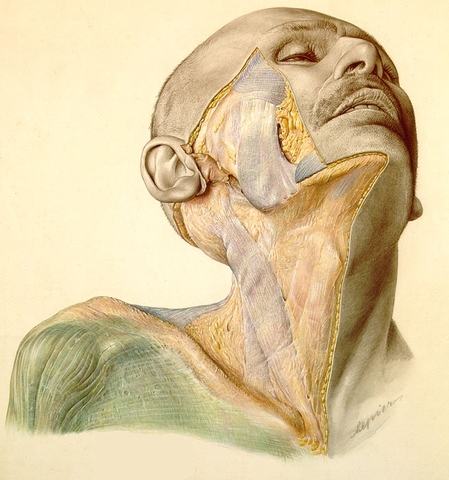 Primeras cirugías maxilofaciales