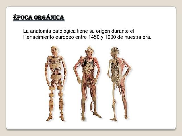 istoric medical bursită purulentă a articulației cotului