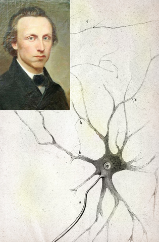 Otto Friedrich Karl Deiters (The Journal of Comparative neurology -2013-)