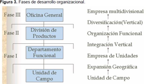 FASES DE DESARROLLO ORGANIZACIONAL