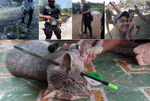 Ley de protección a los animales para el estado de Campeche