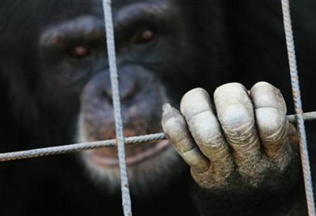 Declaración Universal para el Bienestar Animal (DUBA)