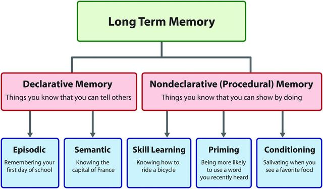 Paradis - Procedural vs. Declarative Memory