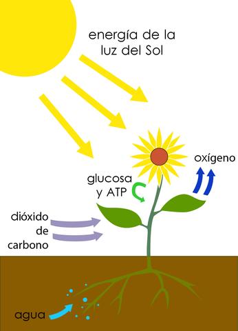 Jan IngenHousz descubre la fotosintesis