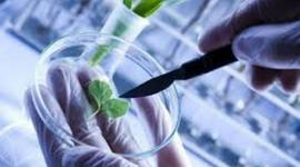 Biotechnolgy Time Line timeline