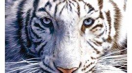 White Tiger timeline