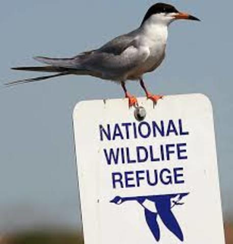 First national wildlife refuge established
