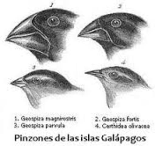 Teoría de la selección natural de las especies