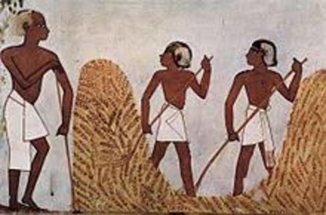 Primeros cultivos en Egipto