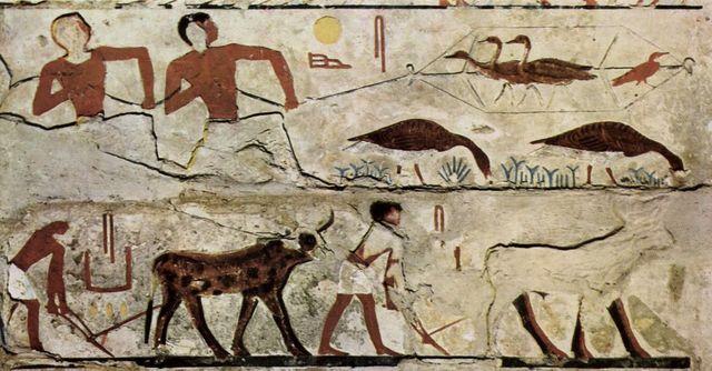 Consumo de carne en Egipto