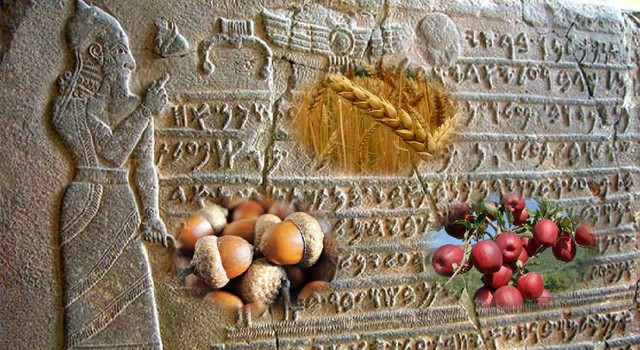 Base alimenticia del Imperio Hitia