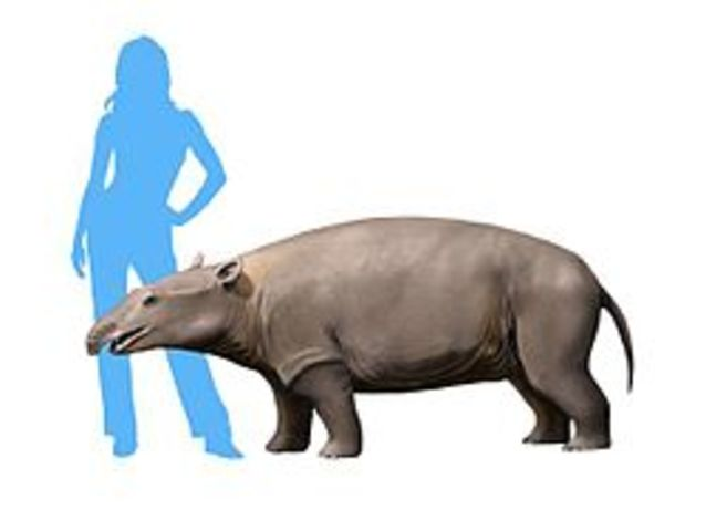 The Meoritherium