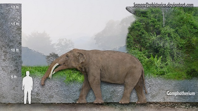 The Gomphotherium